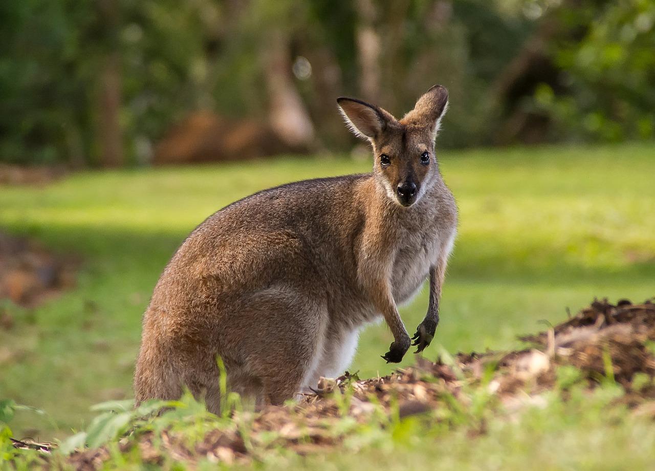 Australská hypotéka